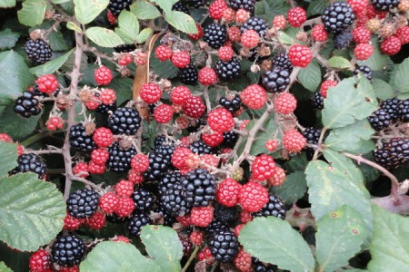 Fruit C