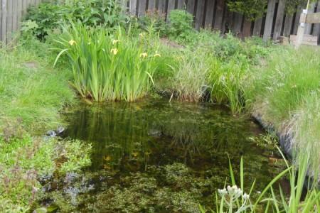 Pond A